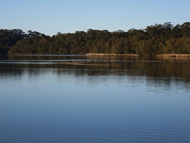 swan-lake-2-jpg