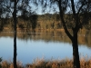 swan-lake-jpg